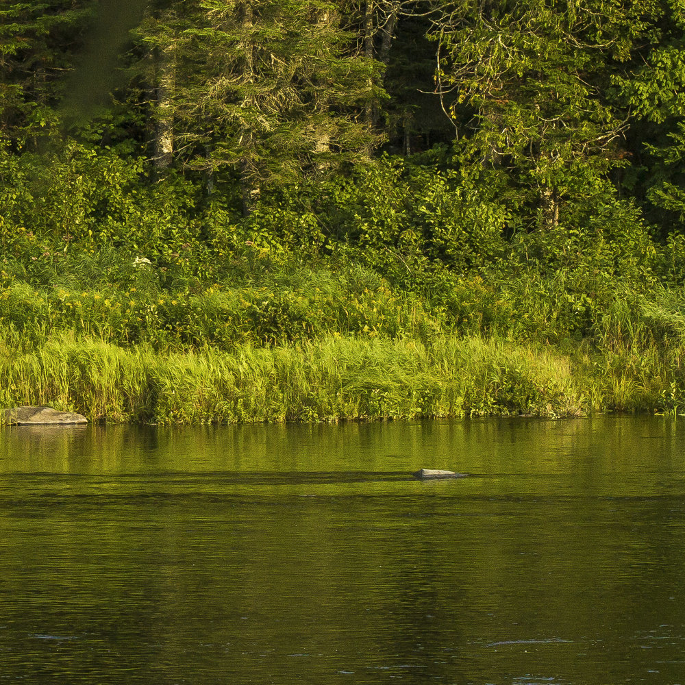 River_Drone1.jpg