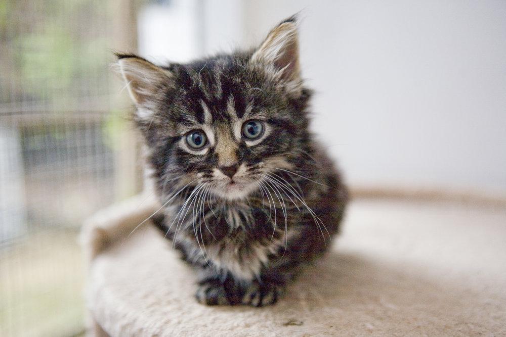 saving hope Cat adoption application -