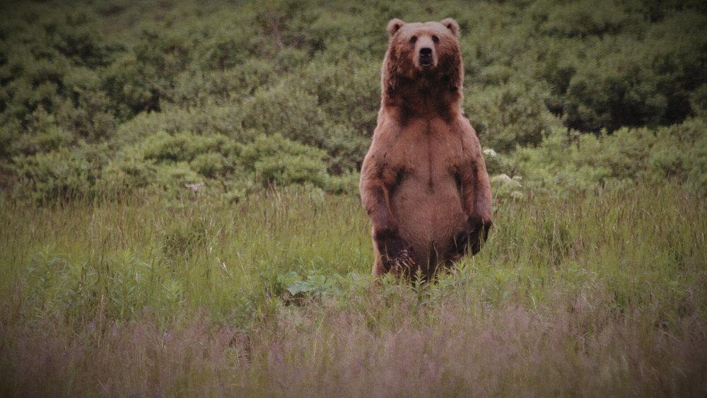 Connecticut Creek Valley - Favorite bear TK1 (MVI_2618).00_00_11_21.Still003.jpg