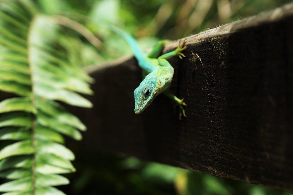 cute lizard Kay 20 pause.jpg