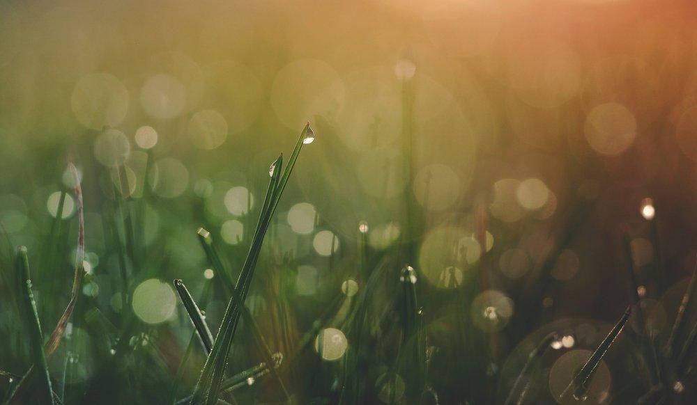 grass with dew closeup.jpg
