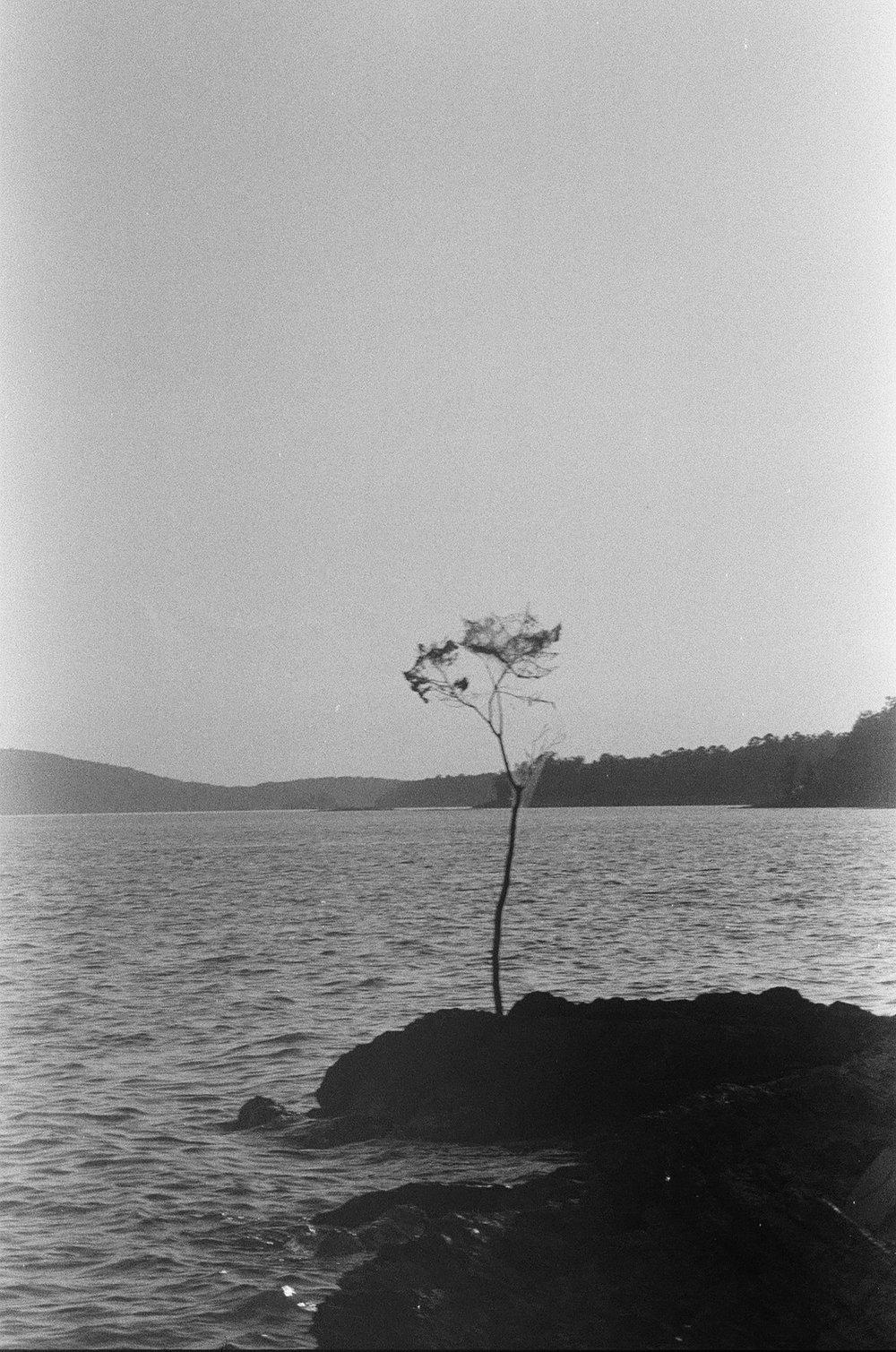 Tree_on_island.jpg
