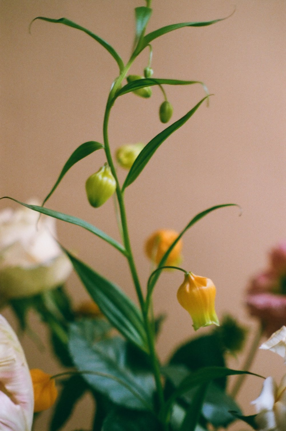 Floral_bouquet_studio.jpg