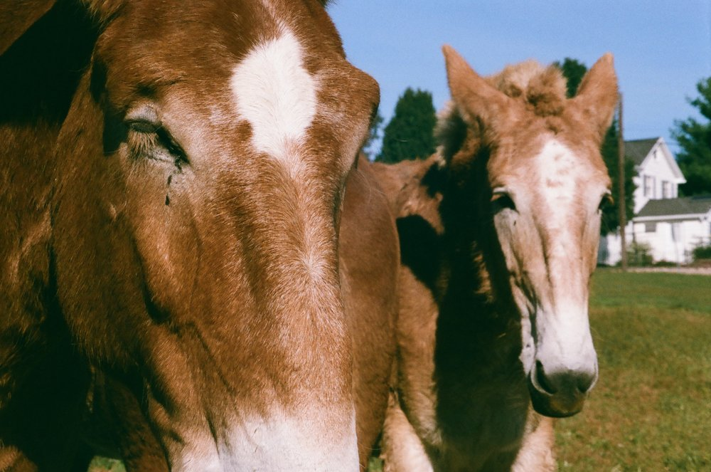 Horses_Pennsylvania_color.jpg