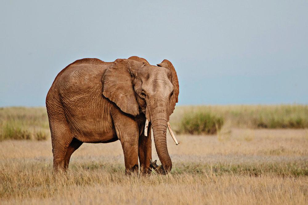 Africa2016-1190.jpg
