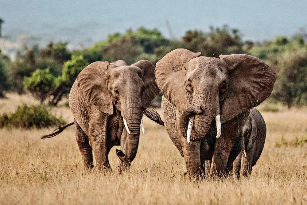 Africa2016-1206.jpg