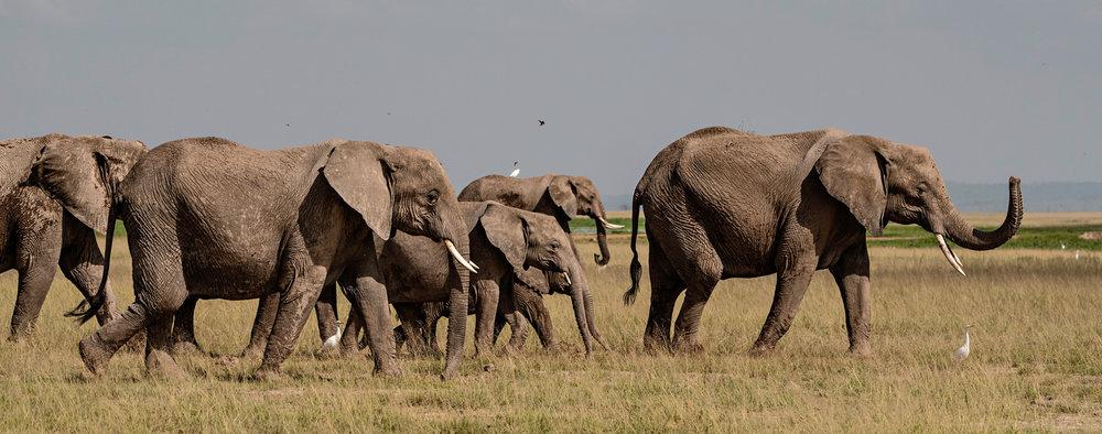 Africa2016-1414.jpg