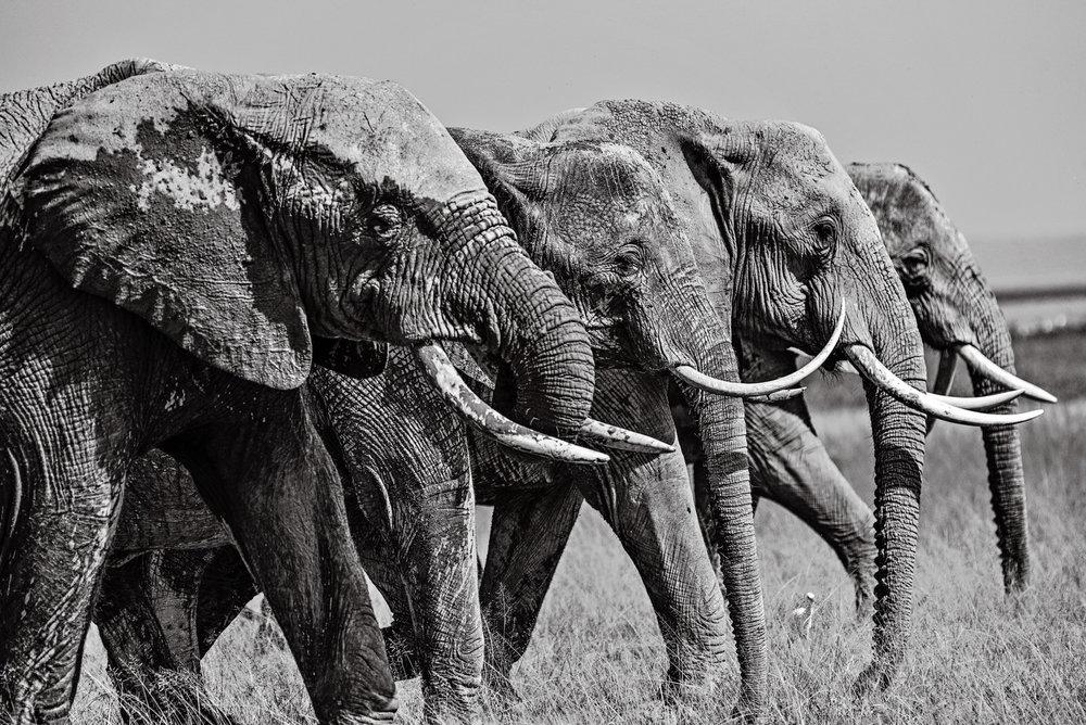 Africa2016-1424.jpg