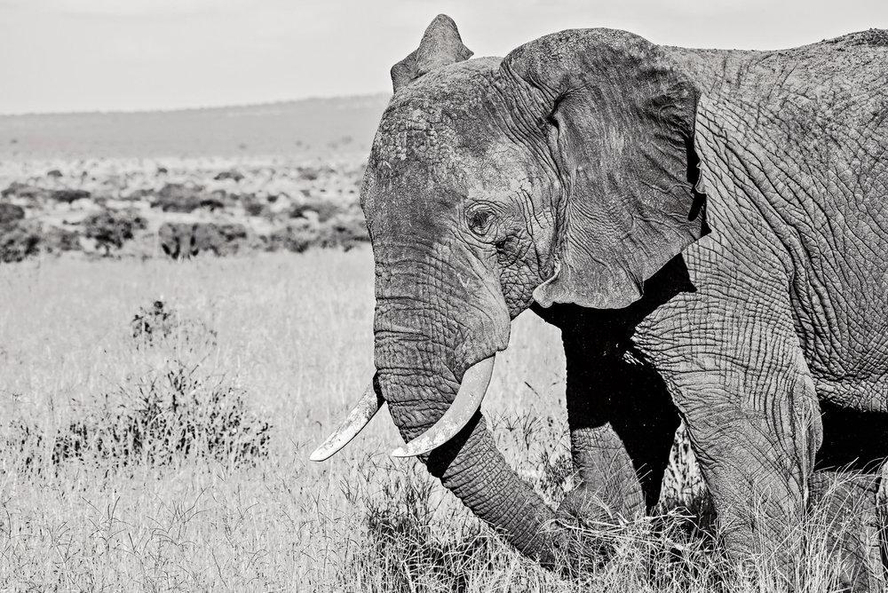 Africa2016-2452.jpg