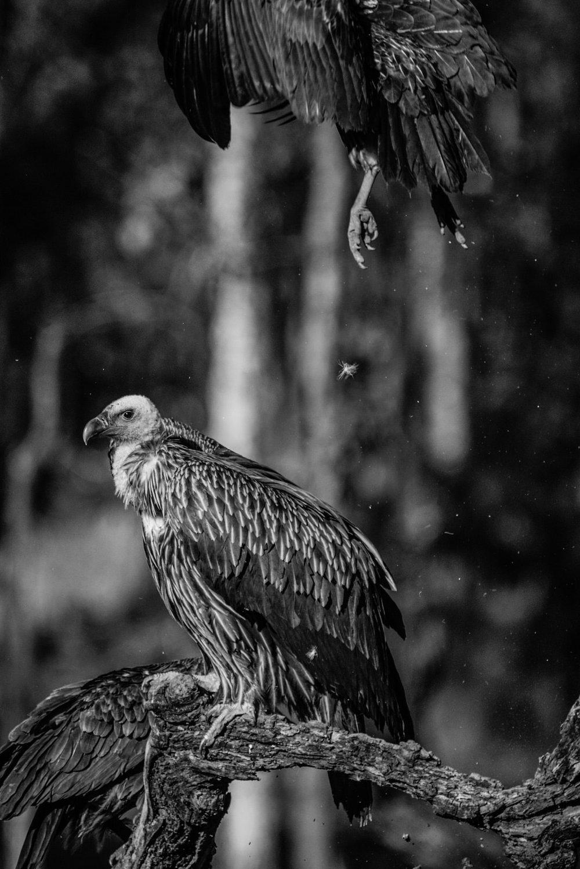 India2016-KathleenHertelPhotography-654.jpg