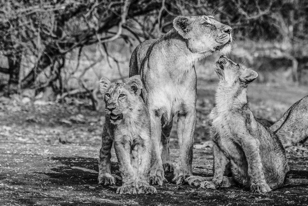India2016-KathleenHertelPhotography-434.jpg