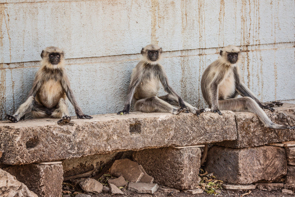 India2016-KathleenHertelPhotography-501.jpg