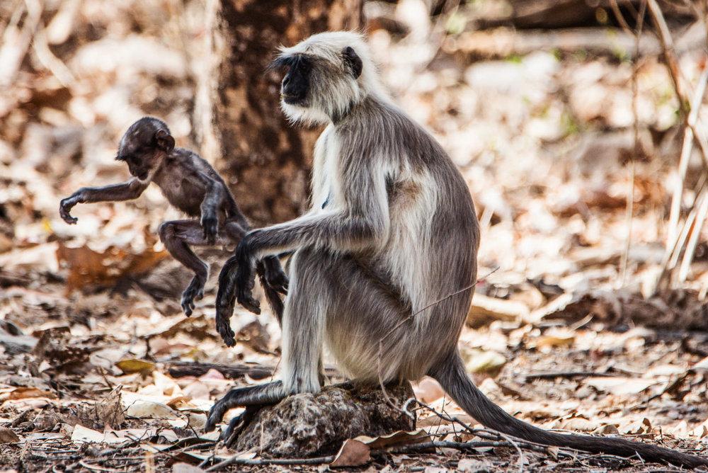 India2016-KathleenHertelPhotography-523.jpg