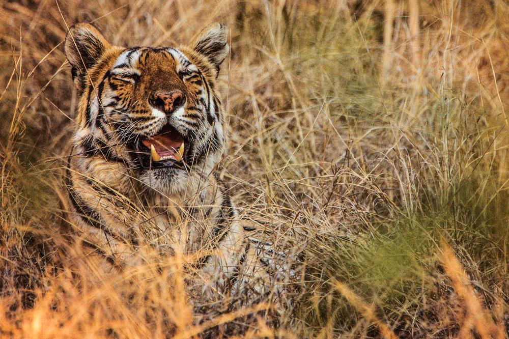 India2016-KathleenHertelPhotography-685.jpg