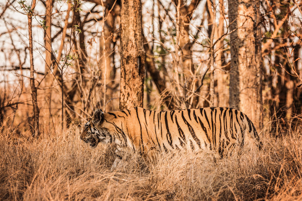India2016-KathleenHertelPhotography-693.jpg