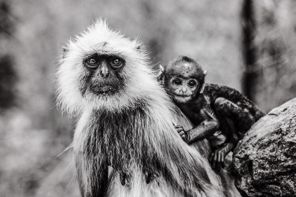 India2016-KathleenHertelPhotography-927.jpg