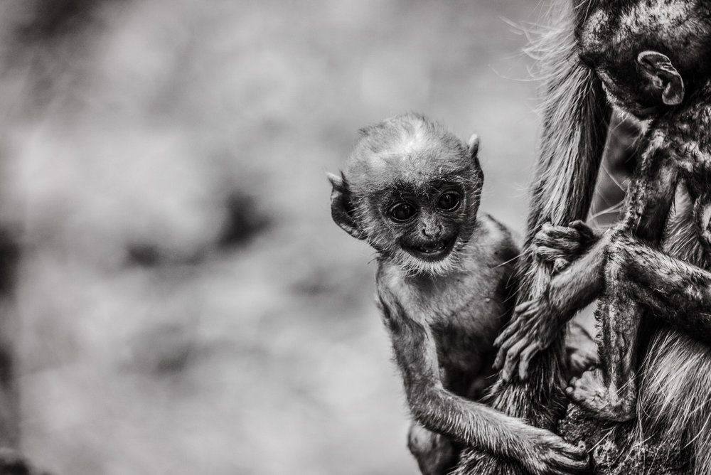 India2016-KathleenHertelPhotography-929.jpg