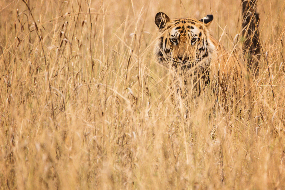India2016-KathleenHertelPhotography-959.jpg