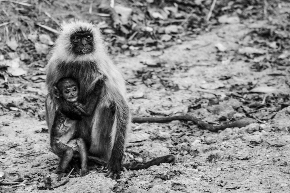 India2016-KathleenHertelPhotography-997.jpg