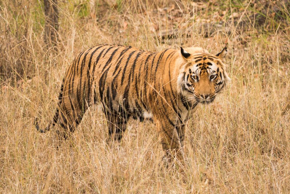India2016-KathleenHertelPhotography-977.jpg