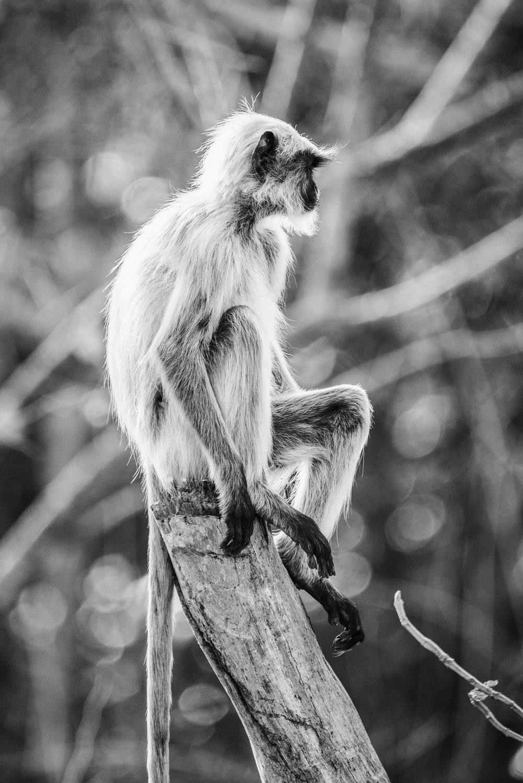 India2016-KathleenHertelPhotography-548.jpg