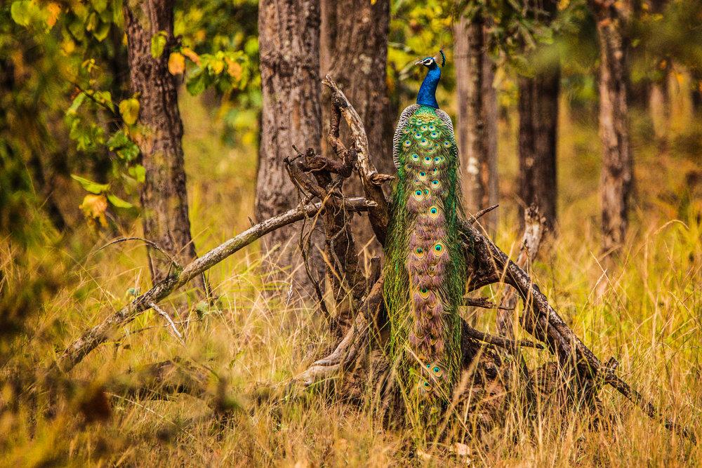 India2016-KathleenHertelPhotography-1008.jpg