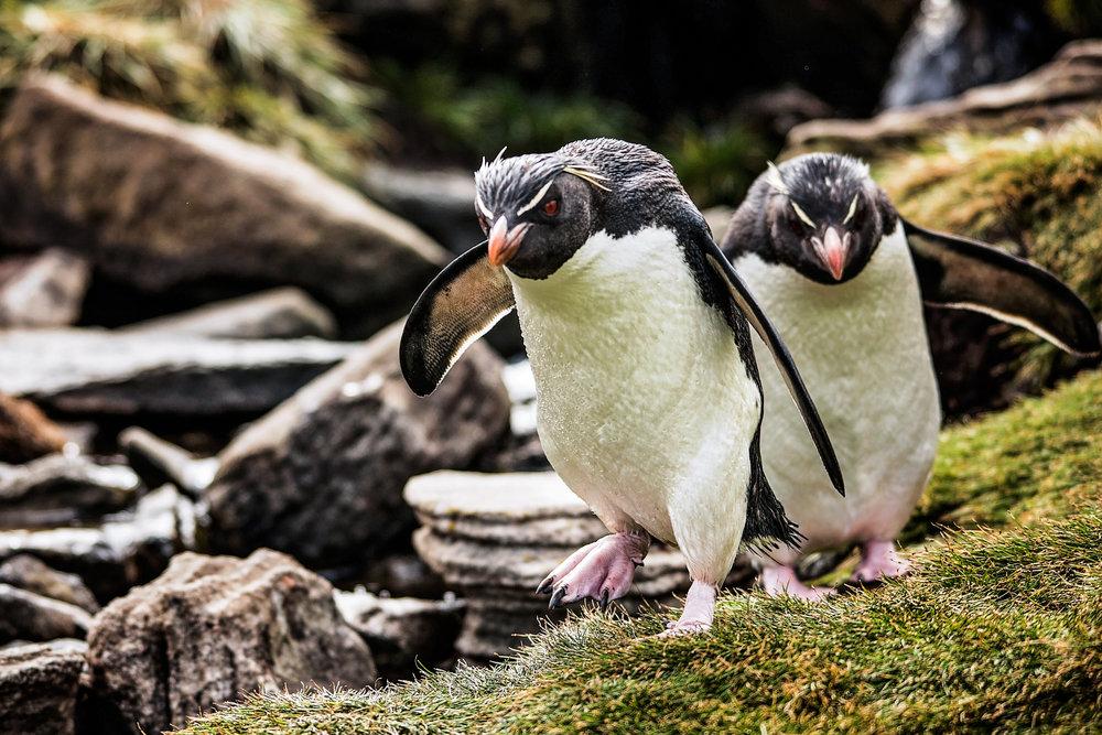 KathleenHertelPhotography-AntarcticaPenguins-11.JPG