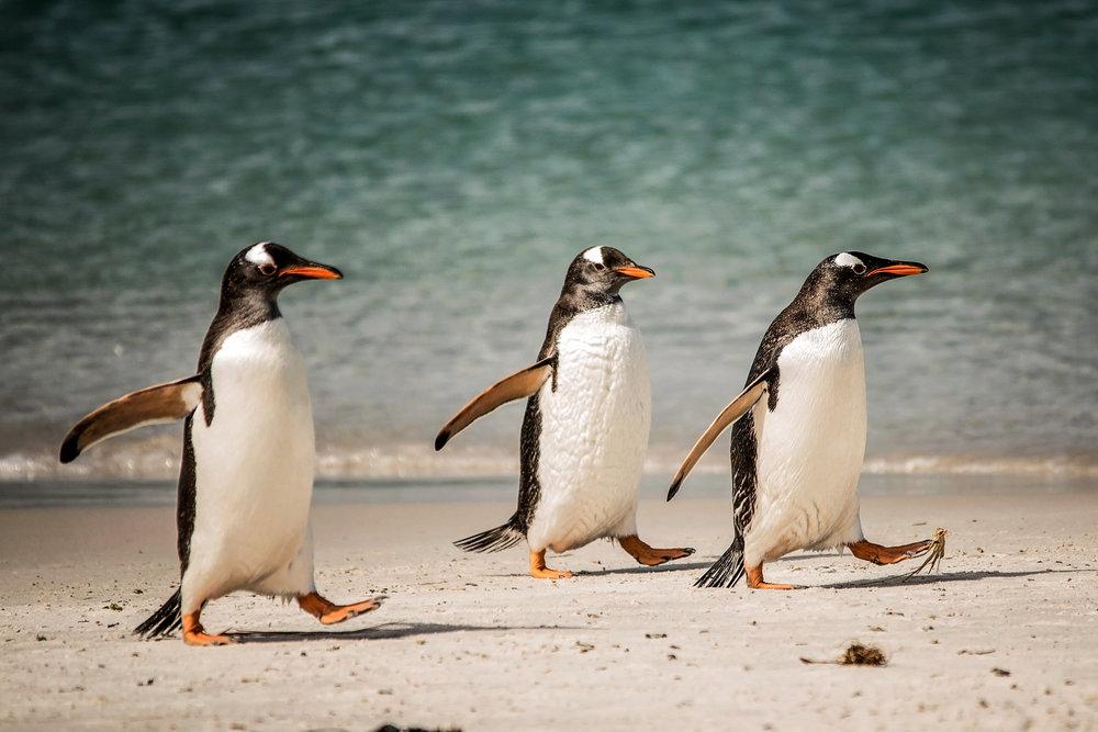 KathleenHertelPhotography-AntarcticaPenguins-28.JPG