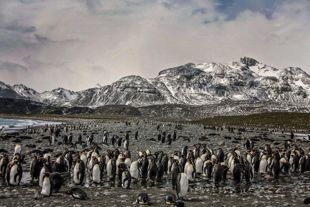 KathleenHertelPhotography-AntarcticaPenguins-76.JPG