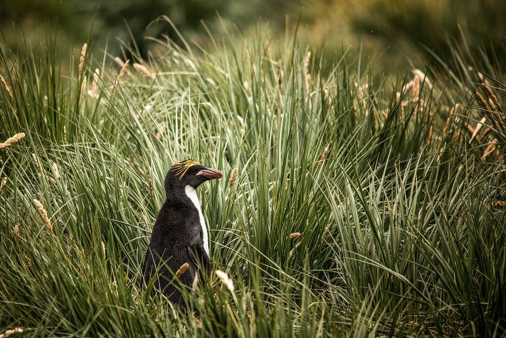 KathleenHertelPhotography-AntarcticaPenguins-110.JPG