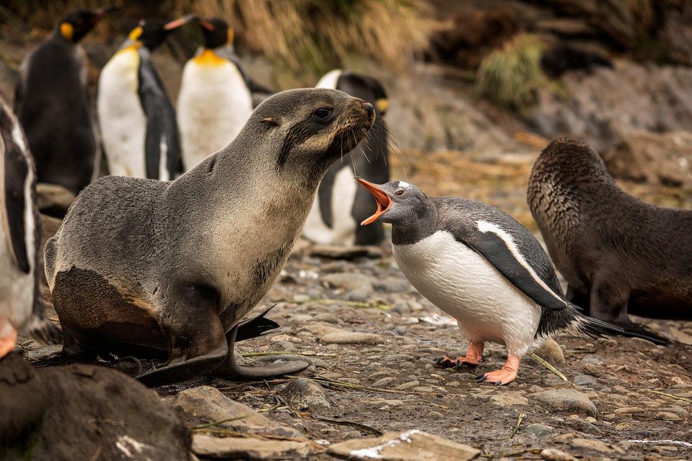 KathleenHertelPhotography-AntarcticaPenguins-129.JPG