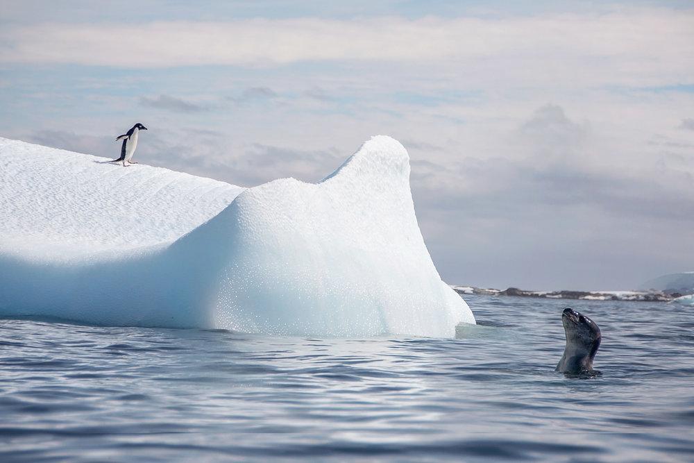 KathleenHertelPhotography-AntarcticaPenguins-168.JPG