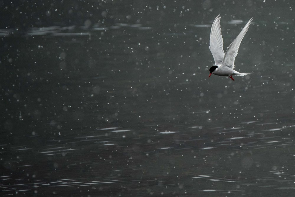 Loveandadventurephotography-Antarctica-702.jpg