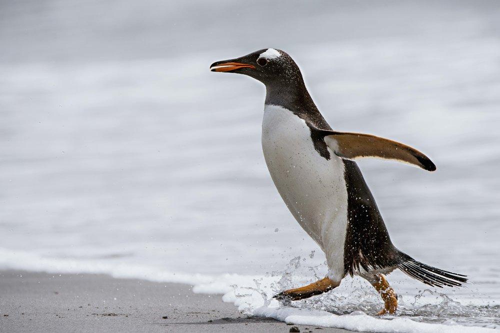 Loveandadventurephotography-Antarctica-704.jpg