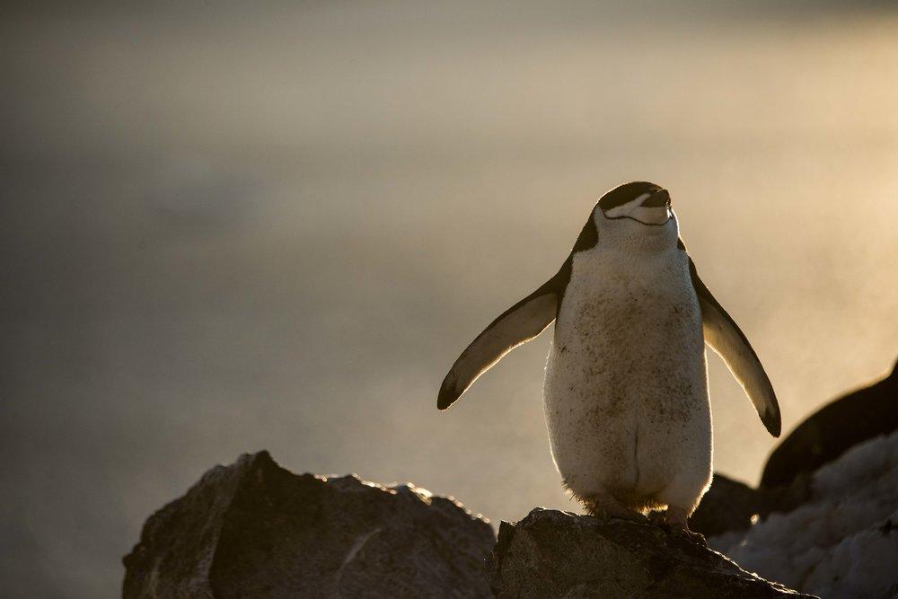 Loveandadventurephotography-Antarctica-706.jpg