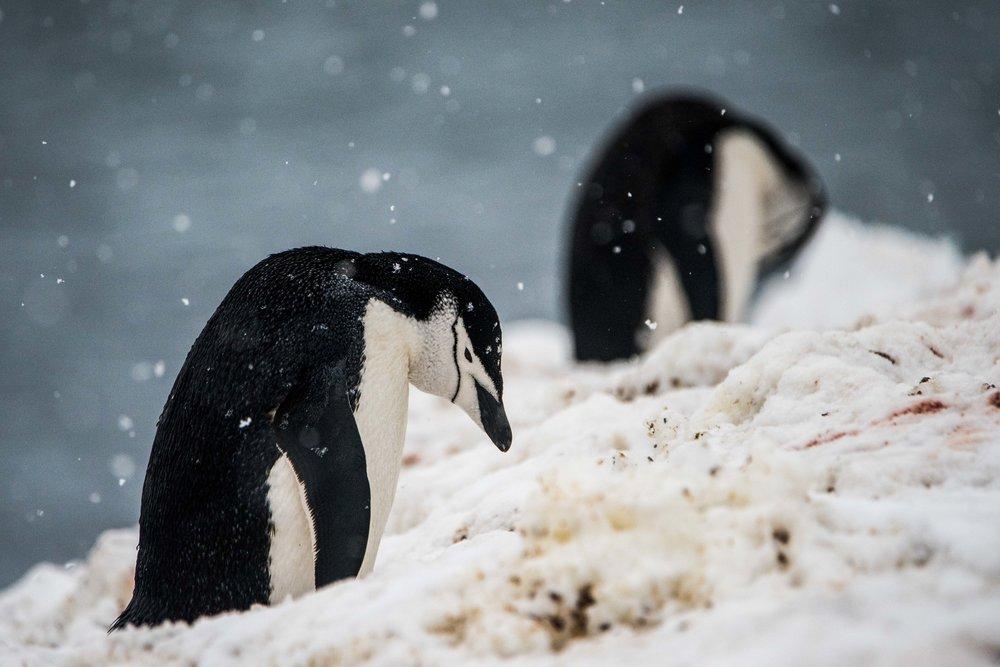 Loveandadventurephotography-Antarctica-710.jpg