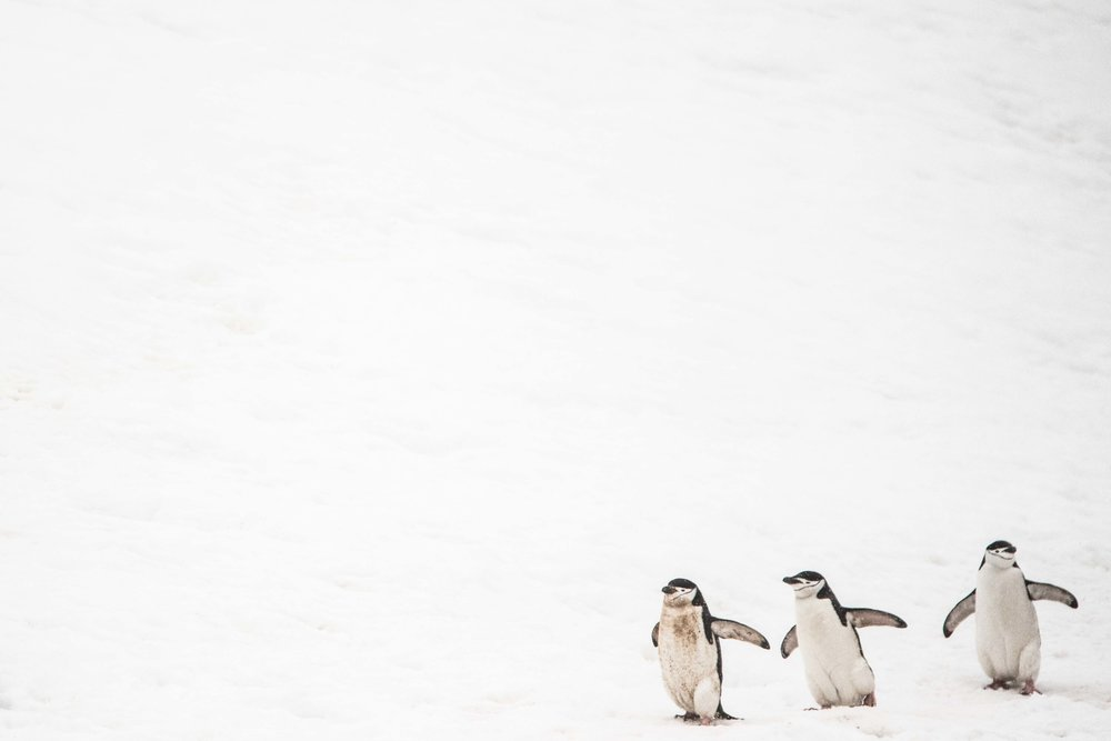 Loveandadventurephotography-Antarctica-713.jpg