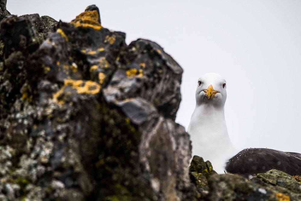 Loveandadventurephotography-Antarctica-712.jpg