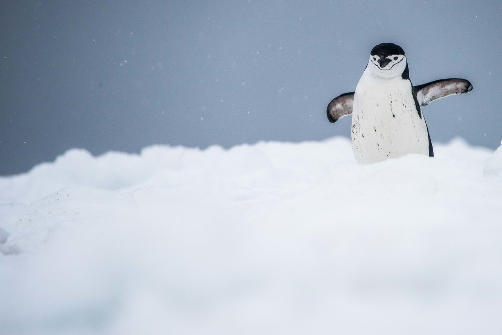 Loveandadventurephotography-Antarctica-714.jpg