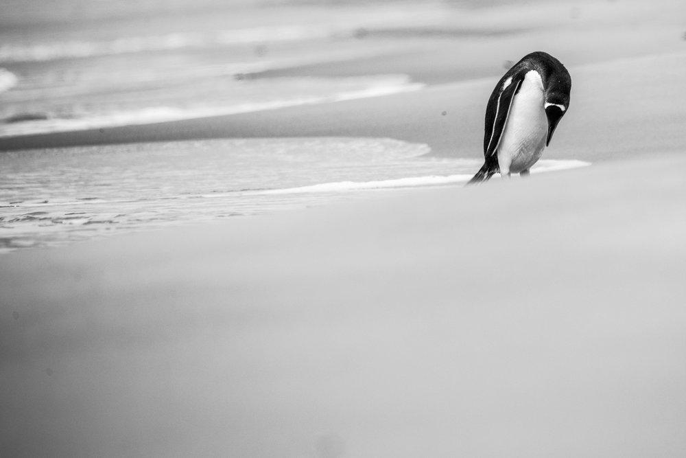 Loveandadventurephotography-Antarctica-717.jpg