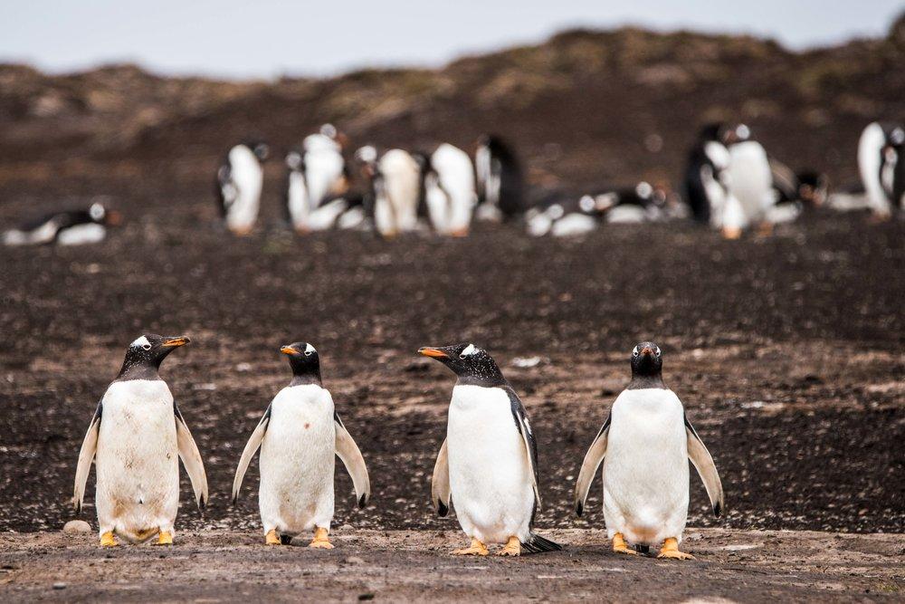 Loveandadventurephotography-Antarctica-716.jpg