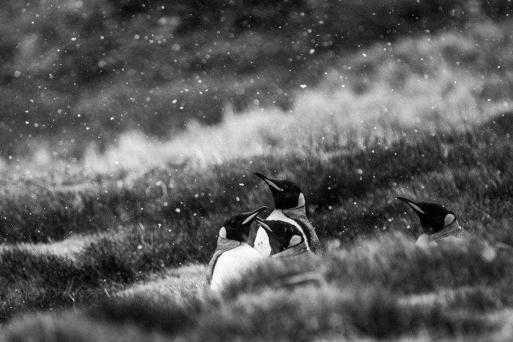 Loveandadventurephotography-Antarctica-718.jpg