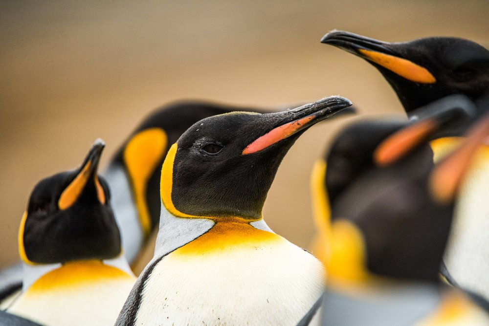 Loveandadventurephotography-Antarctica-722.jpg