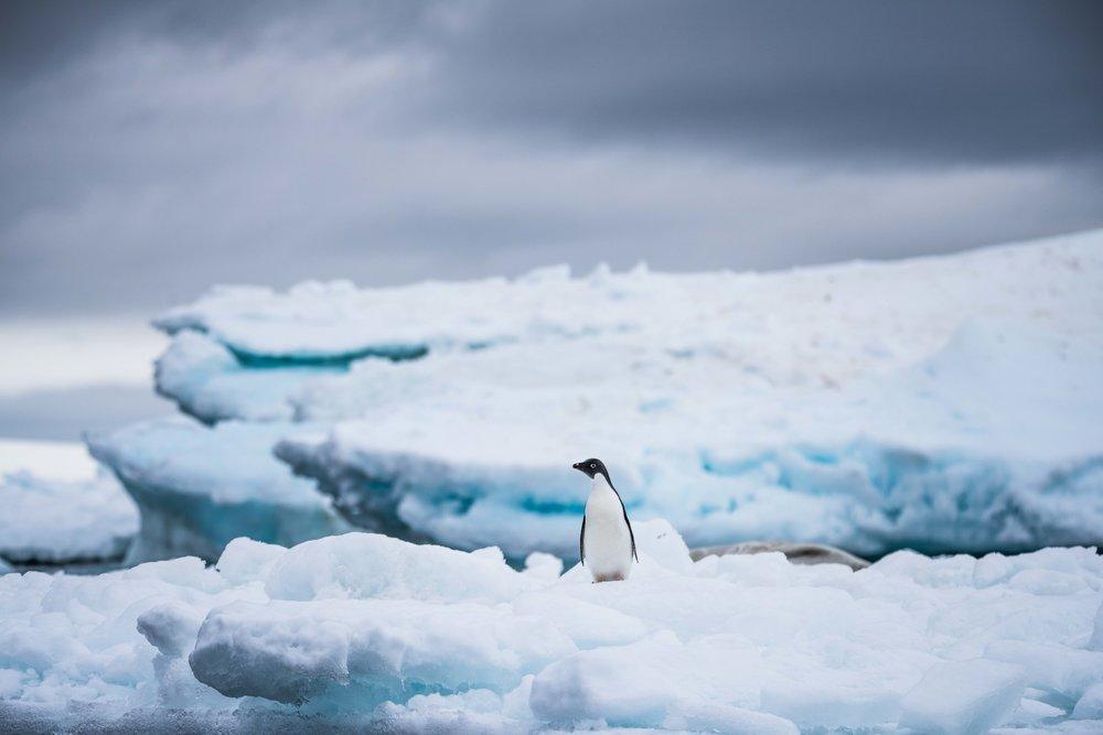 Loveandadventurephotography-Antarctica-726.jpg
