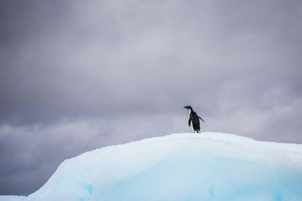 Loveandadventurephotography-Antarctica-728.jpg