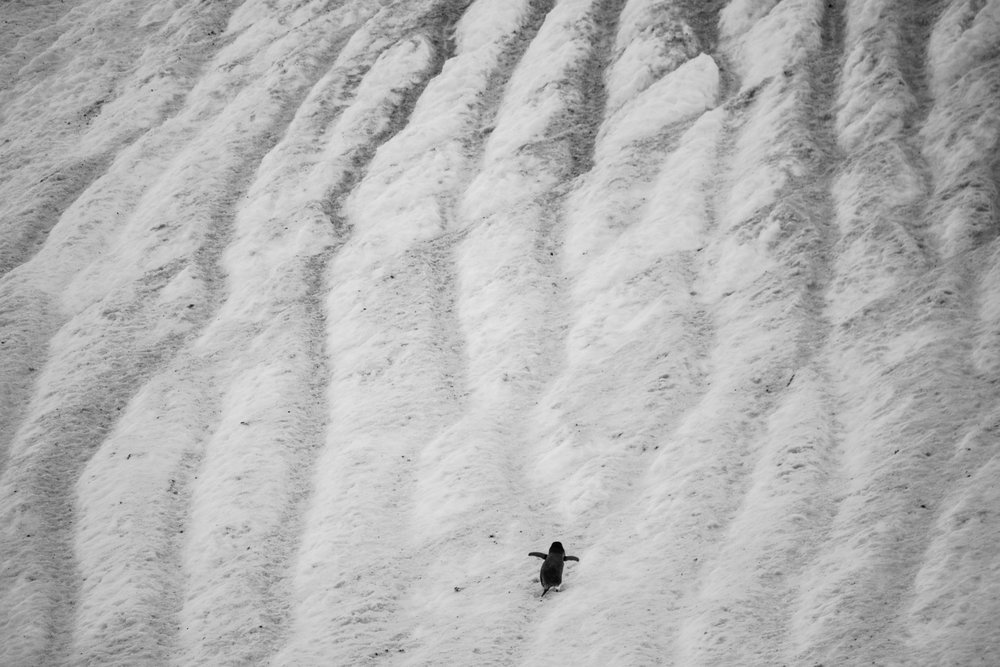 Loveandadventurephotography-Antarctica-727.jpg