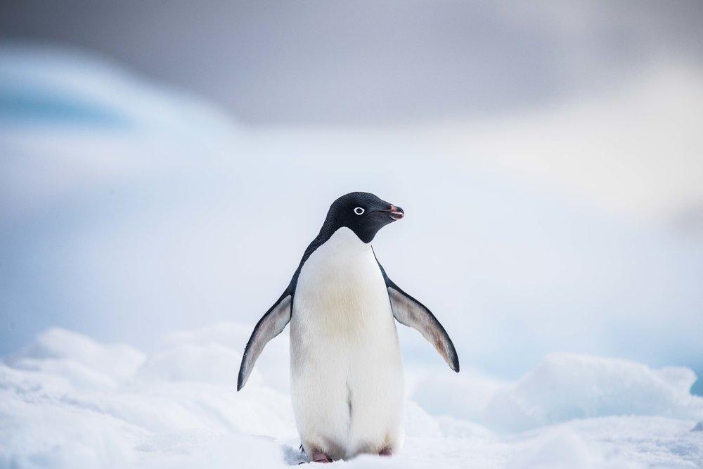Loveandadventurephotography-Antarctica-729.jpg