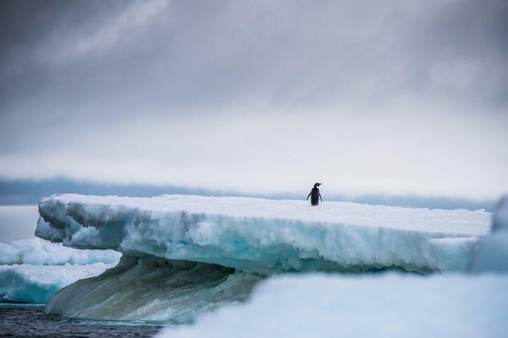 Loveandadventurephotography-Antarctica-730.jpg