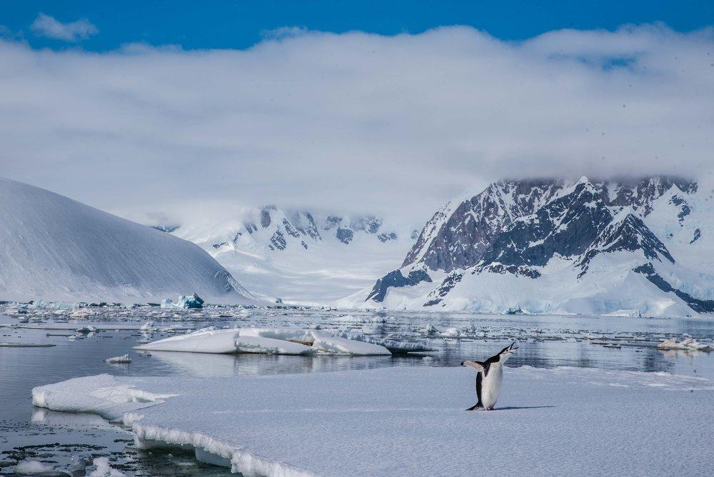 Loveandadventurephotography-Antarctica-731.jpg