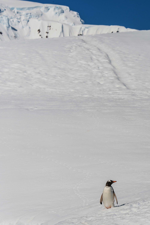Loveandadventurephotography-Antarctica-733.jpg